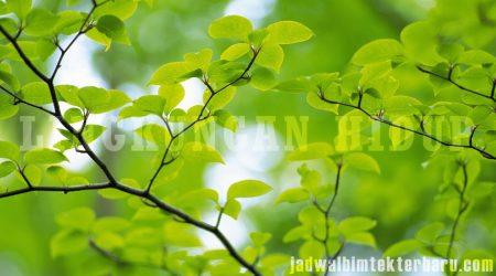 Bimtek Lingkungan Hidup